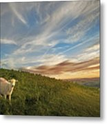 Long Mynd Hill Metal Print