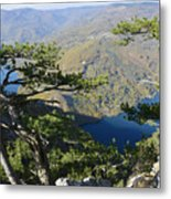 Look At The Pine Trees And The Lake Metal Print