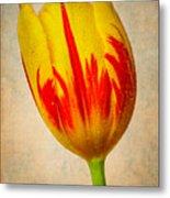 Lovely Textured Tulip Metal Print