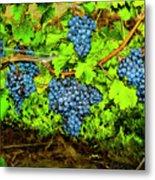 Lucious Grapes Metal Print