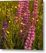 Lupins And Buttercups Metal Print