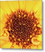 Macro Shot Of A Yellow Flower. Metal Print