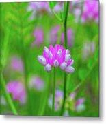 Magenta Wildflower Metal Print