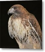 Majestic Hawk Metal Print