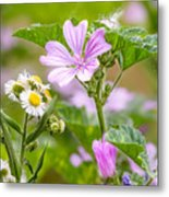 Malva And Chamomile In The Meadow Metal Print