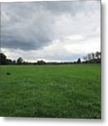 Meadow Near Coswig Metal Print