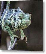 Mellers Chameleon Portrait Metal Print