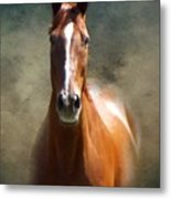 Misty In The Moonlight P D P Metal Print