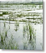 Misty Morning In China Metal Print
