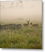 Misty Morning On The Savannah Metal Print