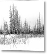 Misty Reeds Metal Print