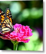 Monarch Butterfly On Pink Flower Metal Print