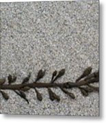 More Seaweed Metal Print