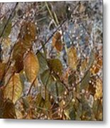 Morning Frozen Metal Print