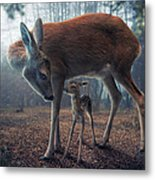 Mother And Fawn Metal Print