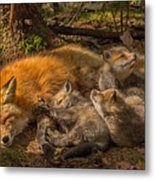 Mother Fox And Her Kits Metal Print