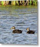 Mottled Ducks Metal Print