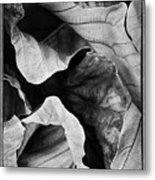 Mounts Botanical Garden 2363 Metal Print