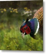 Mr Pheasant Metal Print