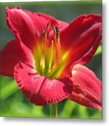 Scarlet Bloom Metal Print