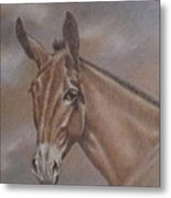 Mule Head Metal Print by Dorothy Coatsworth
