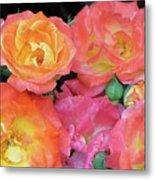 Multi-color Roses Metal Print