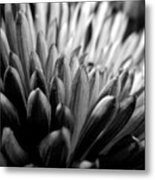Monochrome Flower Series - Mumz The Word Metal Print
