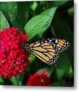 Musing Monarch Metal Print