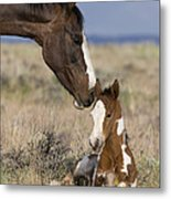 Mustang Mare And Foal Metal Print
