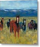 Mustangs In Southern Colorado Metal Print