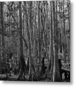 Narrow Path Metal Print