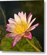 Natures Brilliance Metal Print