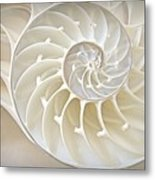 Nautilus 2by3 Metal Print