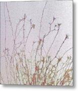 Nerve Cell Culture, Sem Metal Print