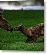Newborn Elk Metal Print