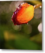 Night Tulip Metal Print