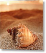 North Shore Seashell Metal Print