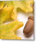 Oak Leaves And Acorns Metal Print