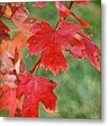 Ohio Autumn1 Metal Print