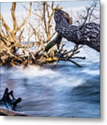 Old Dead Trees On Shores Of Edisto Beach Coast Near Botany Bay P Metal Print