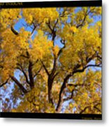Old Giant  Autumn Cottonwood Metal Print