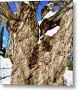 Old Willow Tree Metal Print