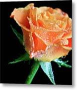 Orange Peach Rose Metal Print by Tracy Hall