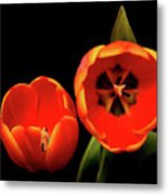 Orange Tulip Macro Metal Print