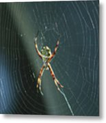 Orb Weaver Spider And Web Metal Print