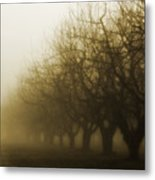 Orchard In Fog Metal Print by Rebecca Cozart