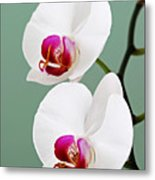 Orchid-2-st Lucia Metal Print