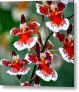 Orchid 34 Metal Print