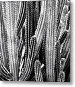 Organ Pipe Cactus Metal Print