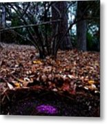 Organize Purple Berries Metal Print